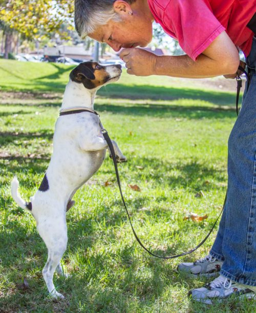 Private dog trainer in North County San Diego available for in home or out in public work with you and your dog.